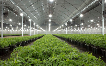 NatuEra Receives License to Cultivate Psychoactive Cannabis 2020-05-09Read More >